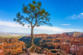 Solitary tree in Bryce Canyon National Park, Utah Royalty Free Stock Photo