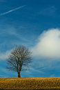 Solitude standing single leafless tree on a grassy hill representing Royalty Free Stock Photo