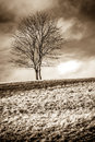Solitude standing single leafless tree on a grassy hill representing Stock Photography