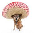Sombrero dog Royalty Free Stock Photo