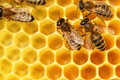 Some bees are going with yellow cells in background Royalty Free Stock Images