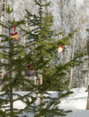 Some christmas balls on the fir-tree. One sharp ball beyond. Royalty Free Stock Photo