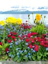 Image : Some colored flowers on the shore of Geneva lake with Swiss alps in a nice bokeh background close fallen scraps
