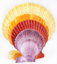 Some colorful seashells of mollusk isolated on white background Stock Photo