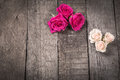 Some cream and pink roses on wooden background Royalty Free Stock Photo