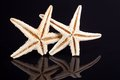 Some of sea stars isolated on black background close up Stock Photos