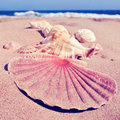Some seashells on the sand of a beach with a retro filter effect closeup Royalty Free Stock Photos