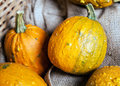 Some yellow Gourds Stock Image