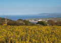 Somerset countryside landscape england Lizenzfreies Stockfoto