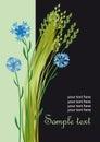 Sommerhintergrund mit Corn-flowers Stockbilder