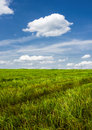 Sommerlandschaft Stockfotos