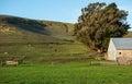 Sonoma county sheep ranch pastoral land in california Royalty Free Stock Photos