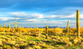Sonoran desert catching days last sunrays Royalty Free Stock Images