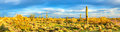 Sonoran desert panorama of at sunset Royalty Free Stock Image