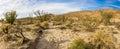 Sonoran Desert Scene Royalty Free Stock Photo