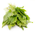 Sorrel Stock Photos