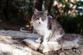 Sorrow cat white and grey sitting on a stone Royalty Free Stock Image