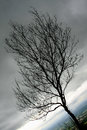 Sorrow dead tree with dark sky background Royalty Free Stock Photography