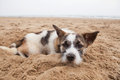 Sorrow face of homeless dog lying on sand beach with lonely feel feeling Stock Photo