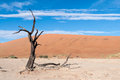 Sossusvlei, Namibia Royalty Free Stock Photography