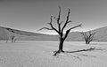 Sossusvlei in namibia monochrome of during winter Stock Photos