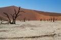 stock image of  Sossusvlei Salt Pan Desert Landscape with Dead Trees, Dunes