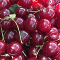Sour cherries close up of Royalty Free Stock Image
