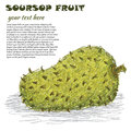 Soursop Royalty Free Stock Photo