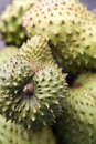 Soursop Foto de Stock Royalty Free