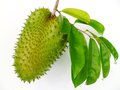 Soursop annona muricata a tropical fruit with green leaves on white background Royalty Free Stock Photos