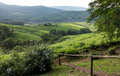 South africa countryside in komatiland forest near debengeni falls magoebaskloof limpopo Stock Photo