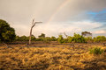 South africa landscape with a rainbow african of savanna in botswana Royalty Free Stock Image