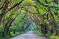 South Carolina Botany Bay Road Tree Tunnel Royalty Free Stock Photo