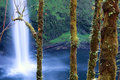South falls beautiful silver oregon Royalty Free Stock Photos