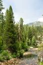South Fork San Soaquin River C...