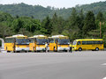 South Korean School Buses in parking lot Royalty Free Stock Photo