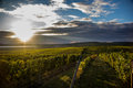 South Moravia Royalty Free Stock Photo