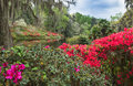 Southern Azalea Garden Royalty Free Stock Photo