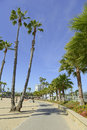Southern California Beach Scene with Surf, Sun and Palm Trees Royalty Free Stock Photo