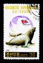 Southern Elephant Seal (Mirounga leonina), Antartic exploration Royalty Free Stock Photo