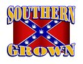 Southern Grown Rebel flag with marijuana leaf stars Royalty Free Stock Photo