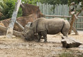 Southern White Rhinoceros in zoo Royalty Free Stock Photo