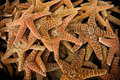 Souvenir dried starfish Royalty Free Stock Photos
