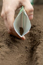 Sowing seeds in spring agricultural Royalty Free Stock Image