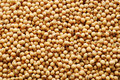 Soy beans background Royalty Free Stock Photography