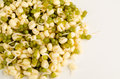 Soy beans and sprouts on a white background Royalty Free Stock Images
