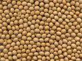 Soya beans Royalty Free Stock Image