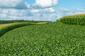 Soybean and corn crops alternating contour strips of soybeans protect against erosion soil depletion Royalty Free Stock Image