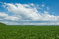 Soybean Field with Rain Cloud Stock Photos