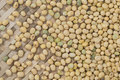 Soybean seed background and textured Royalty Free Stock Photo